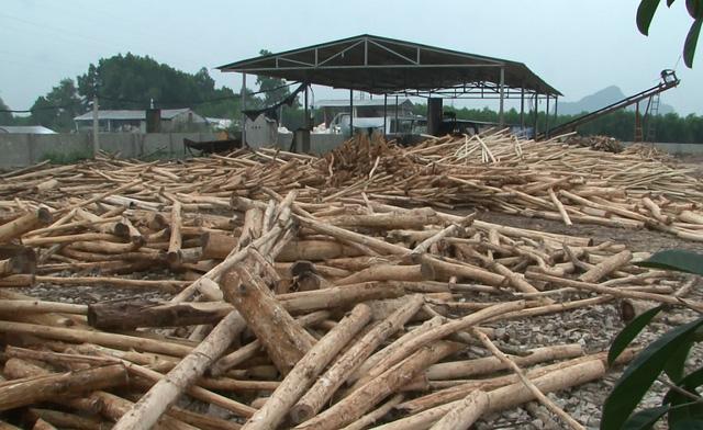 Chia sẻ quy trình sản xuất gỗ công nghiệp hiện nay